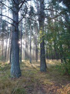 Nasz las w bliskim sąsiedztwie.
