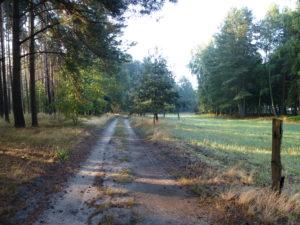 Droga przy lesie.